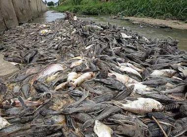 Мор рыбы в Малайзии