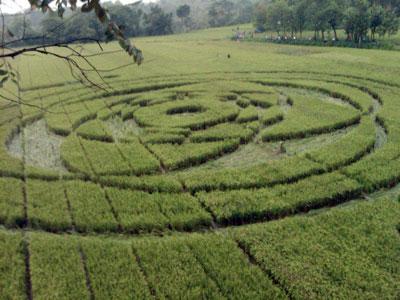 Индонезия: круги на полях в Джакарте