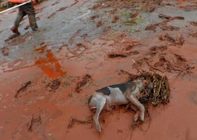 Экологические катастрофы происходят и в Европе