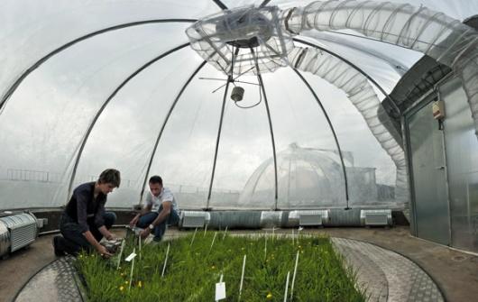 Растения в Экотроне находятся под постоянным мониторингом