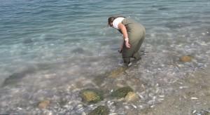 Побережье Флориды усыпано мертвой рыбой