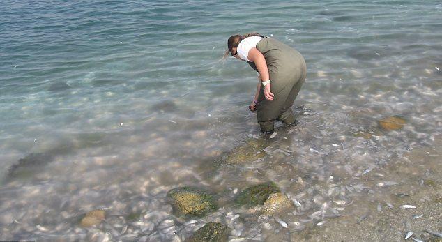 Побережье Флориды полно мертвой рыбы