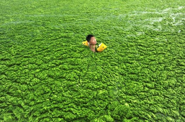 Реки и озера Китая заполнены цветущими водорослями из-за сбросов стоков предприятий