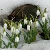 Россия: весна и осень исчезнут