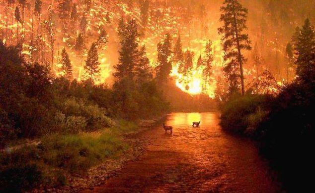 Россия вступила в сезон лесных пожаров