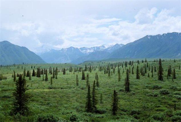 Через тридцать лет леса захватят территорию Арктики