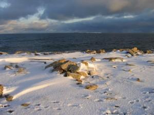 Изучен арктический климат в период от 2,2 до 3,6 млн. лет назад