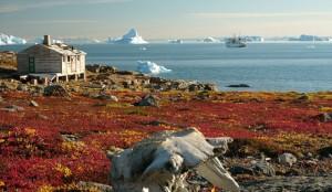 Гренландия снова станет зеленой в 2100 году