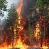 Частота пожаров в США достигла максимума за 10 тысяч лет