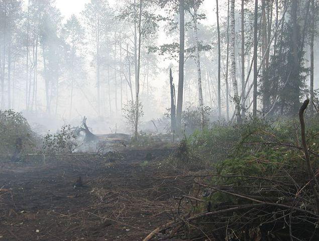 Летом 2014 года ожидаются сильные торфяные и лесные пожары