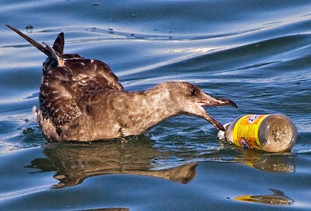 Загрязнение вод Мирового океана касается каждого