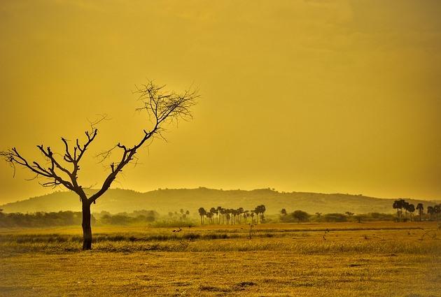 Засуху можно предсказать на год вперед