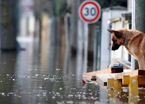 Второй всемирный потоп