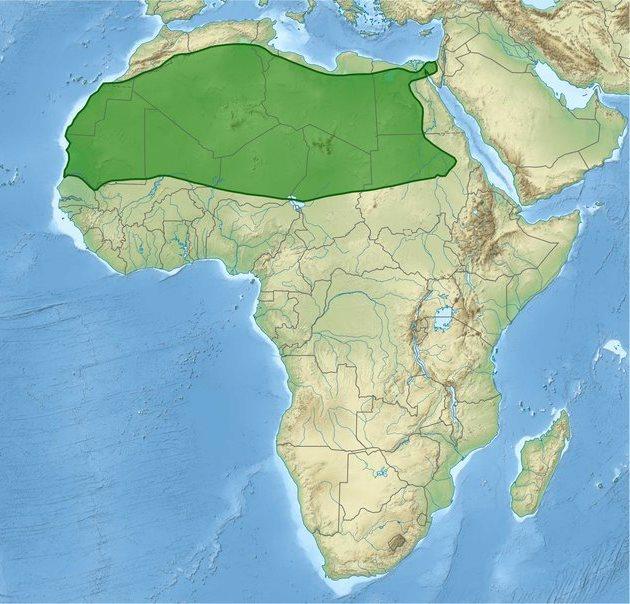 Площадь Сахары