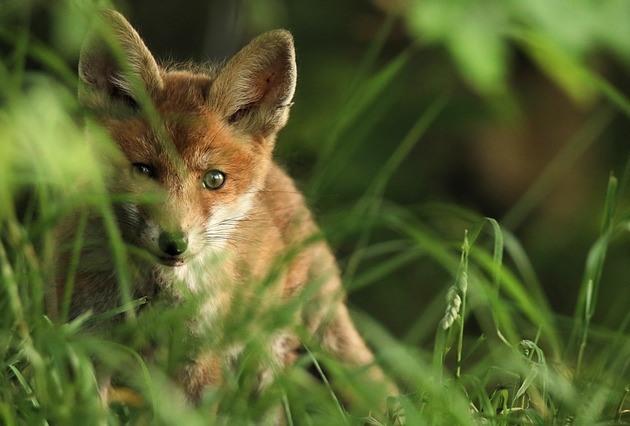 Человек уничтожил 83% диких животных